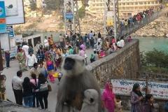 Rishikesh and Yogy Monkey